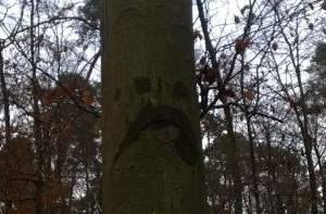 Baum traurig